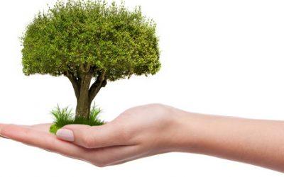 Retour de la distribution d'arbres – 22 mai 2021
